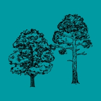 Declaración de bosques NY