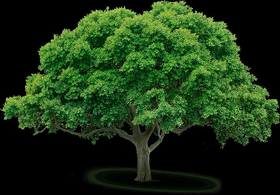 arbol deforestacion