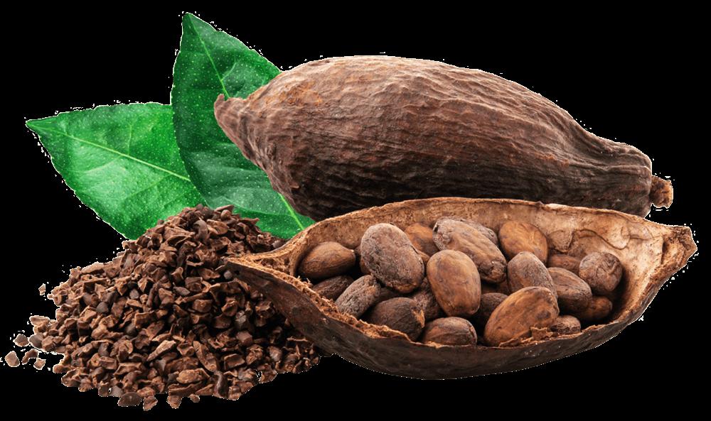 Cocoa-Interna-Acuerdos-recortada